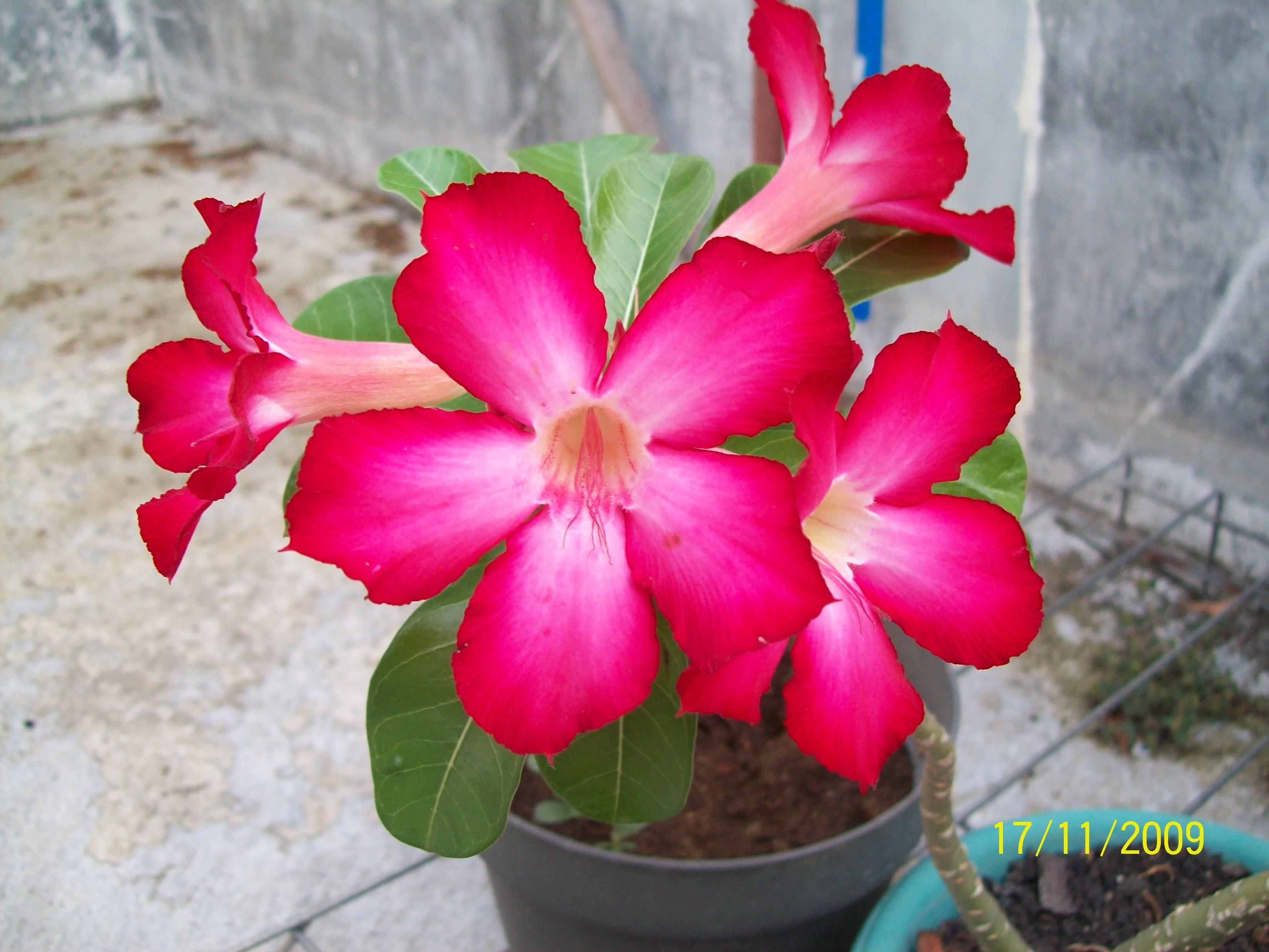 bunga di halaman rumah all about me
